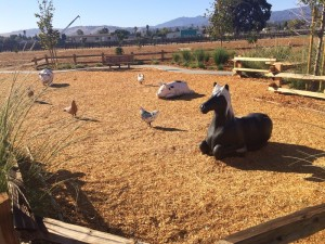 martial-cottle-park-farm-animals